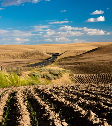Desert Farming - Microgrids